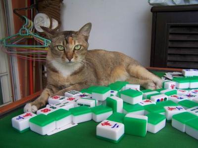 你还在沉迷打麻将?给喜欢打麻将的一个忠告